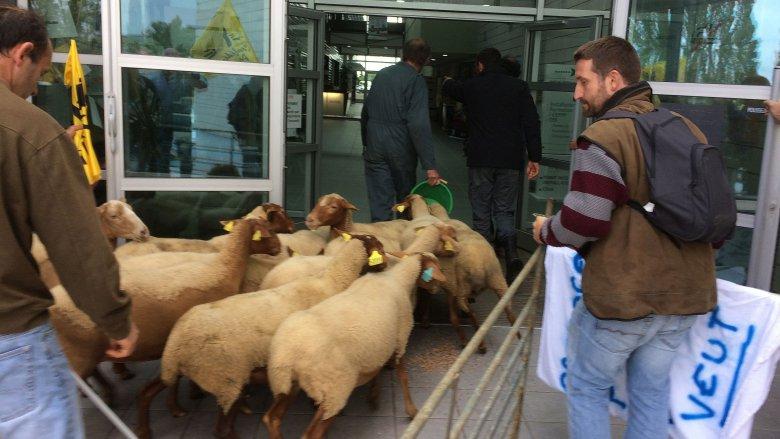moutons_aude_2-3253141